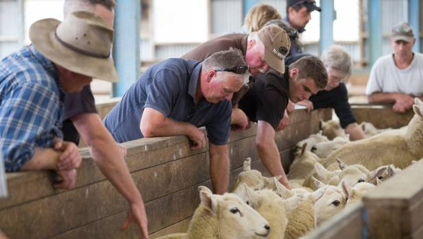 Farmers at a Beef+Lamb NZ body conditioning scoring workshop where they try their hand at condition scoring ewes at ...