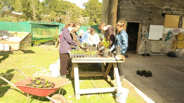 Kaipatiki Project nursery at Hobsonville Point relies solely on the work of volunteers.
