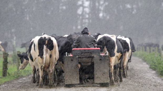 Rain and mud - the story of the farming year so far.