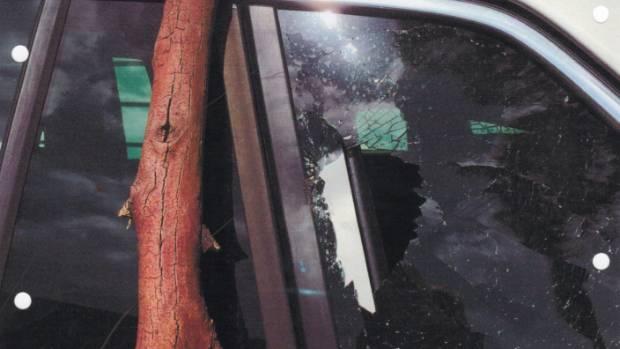 This falling dead limb from a eucalyptus tree smashed John Gibb's rear window.