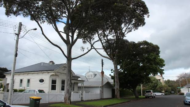 The two eucalyptus trees on Oxford Terrace are a non-native species, which John Gibb feels is out of character for his ...