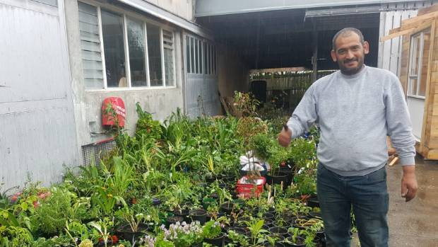 Syrian refugee Khaled Al Joujam, who was a victim of vandals on his Lower Hutt nursery, with his new plants after a ...