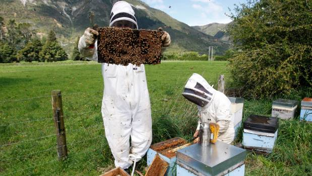 Steve Zeller (left) checks the hive at the property in East Takaka, with another beekeeper, Lucien Schroder.