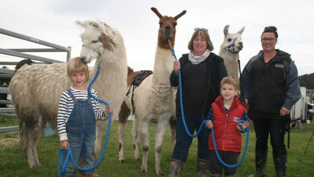 The Leng Family's llamas were a popular attraction with visitors to the first East Otago Field Days in Palmerston last year.
