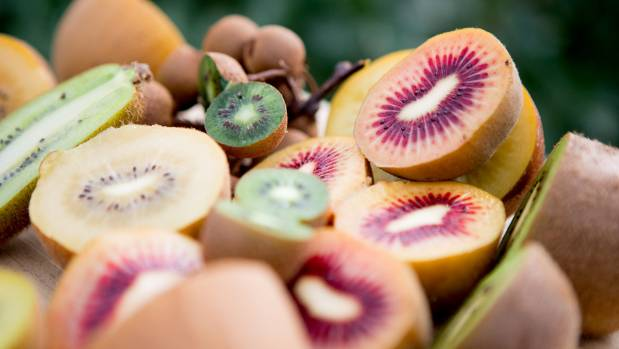 Zespri will keep ahead of its competitors by producing new kiwifruit cultivars. Plant and Food Research along with ...