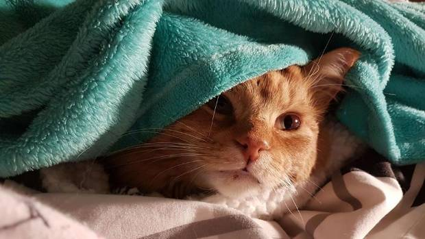 The dazzling colour combo of ginger Alf and a, um, turquoise blanket.