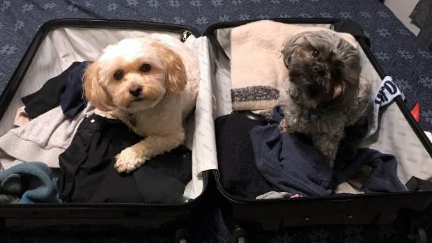 Another story told in a picture: Dexter and Luther have travel ambitions.