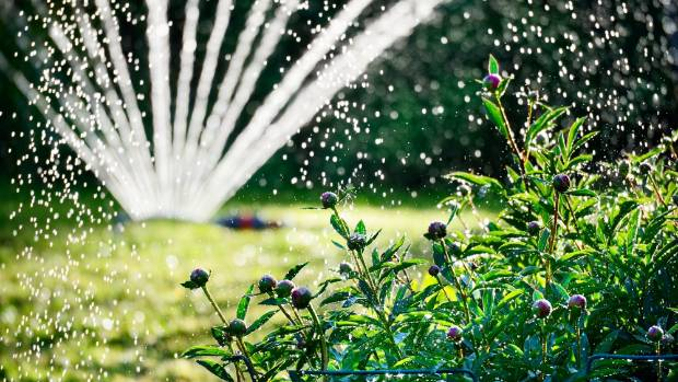 Gardening is a major user of water, particularly in the Garden City.