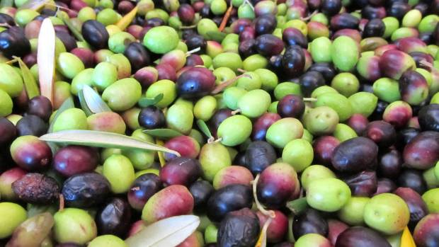 Grahame Taylor says a good blend is made from olives that are green, straw-coloured, and dark.
