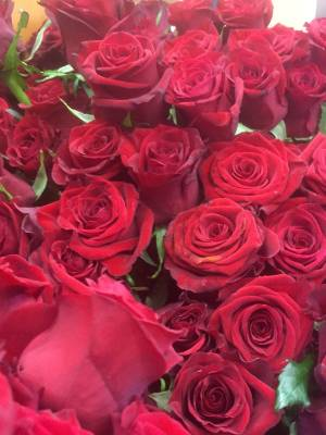 There are 2500 roses ready to sell at the fundraiser on Thursday.