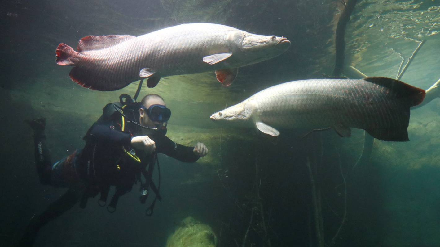 Europe's largest freshwater aquarium set to open   Stuff.co.nz  Europe's la...