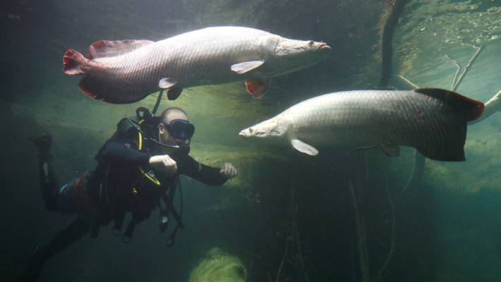 Europe S Largest Freshwater Aquarium Set To Open Stuff Co Nz