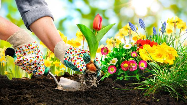 Here Are Five Reasons To Wear Garden Gloves And There Are Plenty