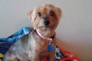 Joanie Simpson was so devastated by the death of her Yorkshire terrier, Meha, that doctors diagnosed her with ...