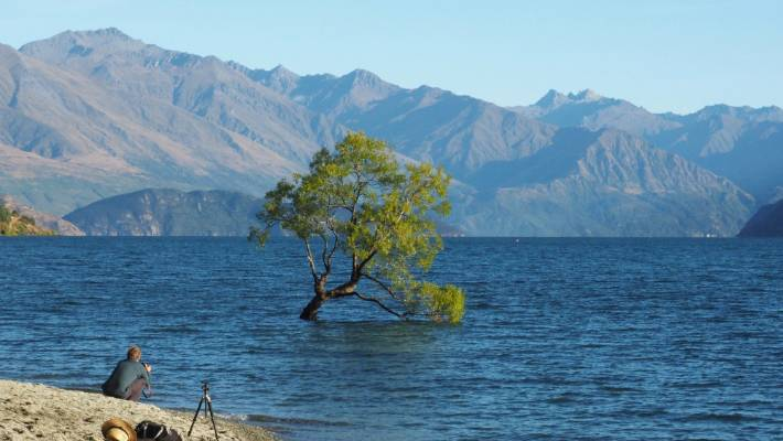 World Famous in New Zealand: That Wanaka Tree, Wanaka