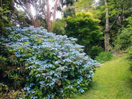the flowering shrub expert the worlds best selling book on flowering shrubs