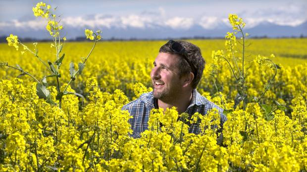 South canterbury crops look spectacularly good stuff south canterbury farmer andrew darling was surprised how well the canola crop had grown on his mightylinksfo