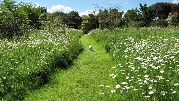 Nz Grasses For Landscaping Meadows the next big thing in sustainable gardening stuff the meadow at ayrlies workwithnaturefo