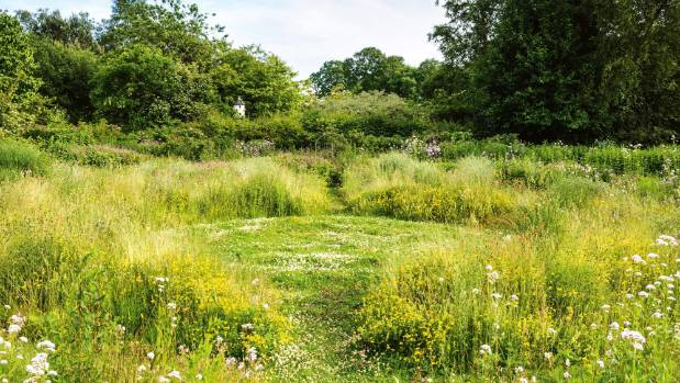 Nz Grasses For Landscaping Meadows the next big thing in sustainable gardening stuff a meadow garden where white clover trifolium repens birds foot trefoil lotus workwithnaturefo