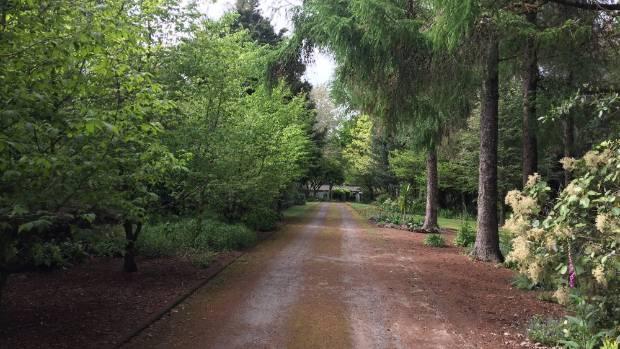 Trees line the entrance Te Popo gardens near Stratford