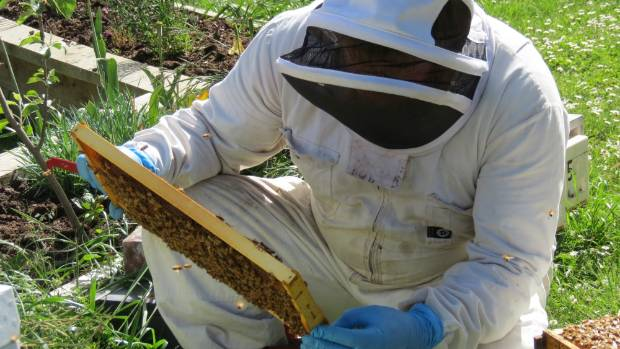The bees are all right, for now - but it takes a lot of work