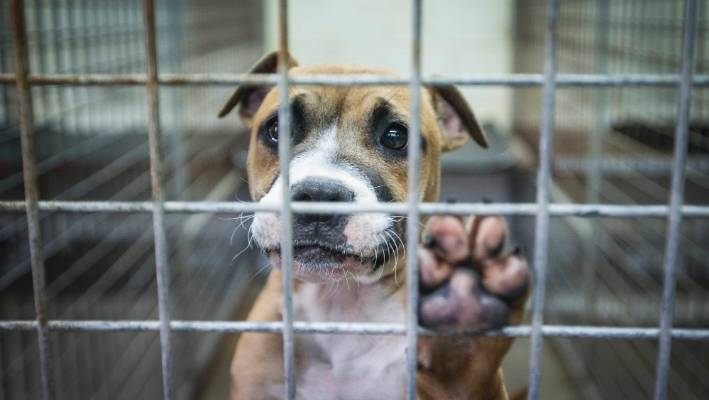 Close to 3000 dogs put down by Auckland Council last year
