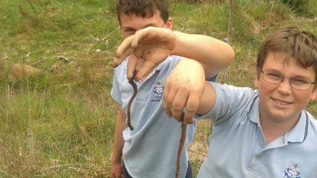 Tom Lloyd, left, and a friend with some of the giant earthworms found at Kelly's Bush in Enner  Glynn.