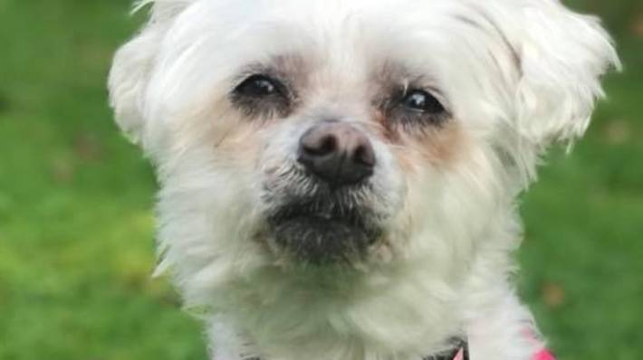 Fur Baby Killed By Rottweiler Not On Leash In Hamilton Stuffconz