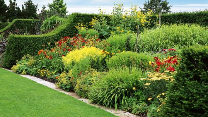 How To Look After Perennial Flowering Plants In Spring Stuff