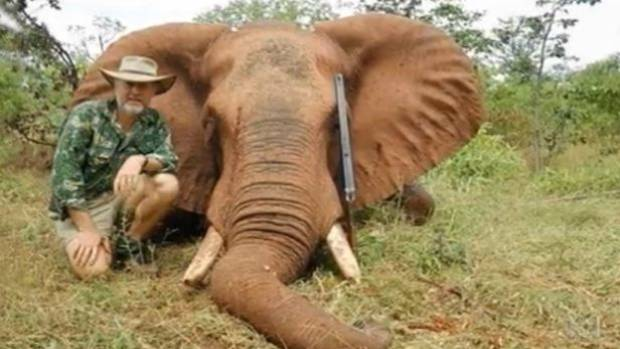 A Hunter With Dead Elephant