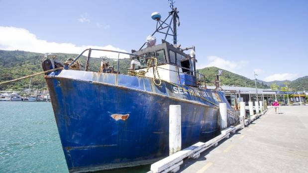 Shaggy bottomed boat sparks marine pest fears in picton for Sparks marina fishing