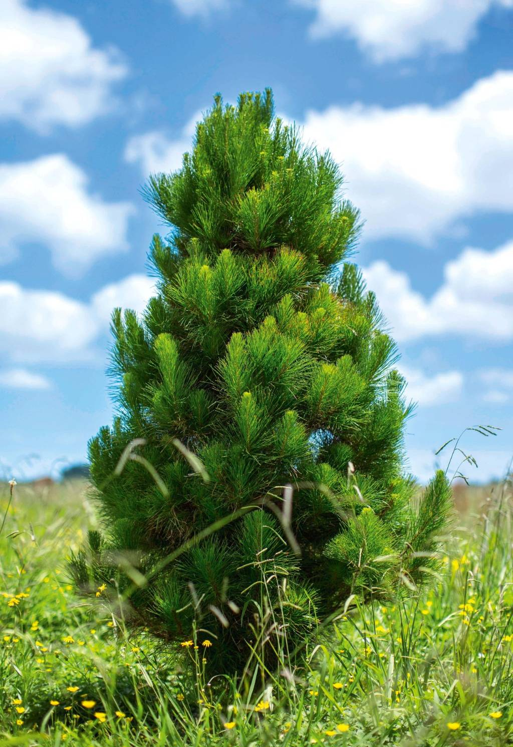 Whats The Best Real Christmas Tree Stuffconz