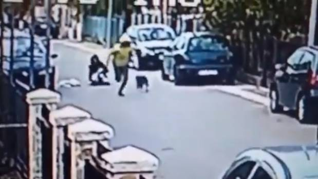 Stray dog saves woman from roadside robbery
