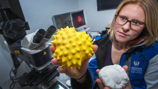 Dr Katherine Holt holds models of pollen molecules approximately 2000 to 3000 times their real size (file photo).