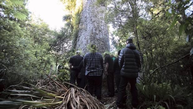 West Auckland iwi te Kawerau a Maki said they needed to take drastic measures by putting a rāhui on the Waitakere Ranges ...