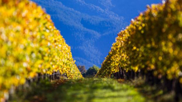 Figures from Tourism New Zealand show wine tourists spend more and stay longer.