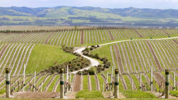 Marlborough has the potential to be a world famous wine holiday destination.