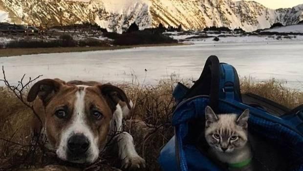 Best Dog Instagram Photos