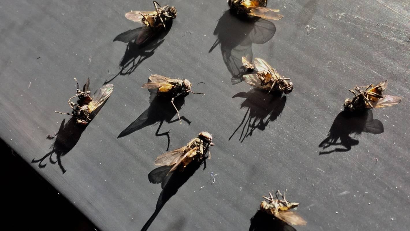 2018: The year the flies stuck around | Stuff co nz