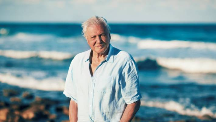 Image result for david attenborough climate change