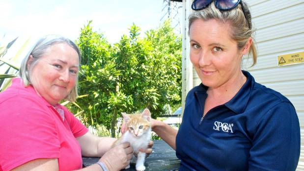 Ginger Snap the kitten is under the care of foster mum Yvonne Davies, left and SPCA Centre Manager Abby Laskey.