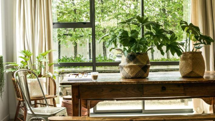 Indoor Plant For Every Room