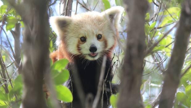 panda garden uspandagarden - Panda Garden Sugar Land
