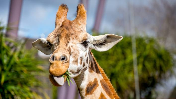 Auckland Zoo animals' Christmas Day treats   Stuff.co.nz