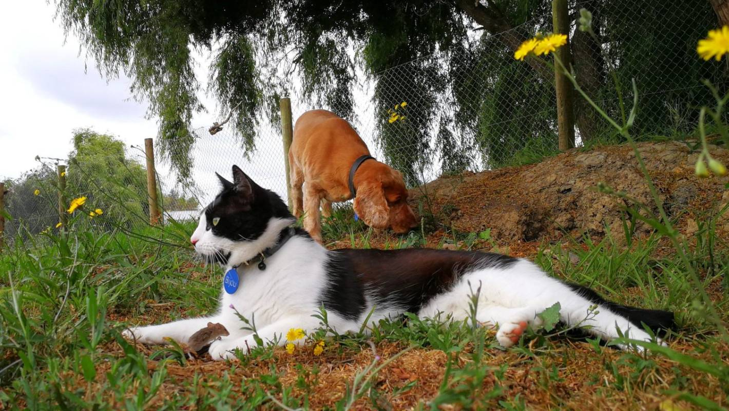 A rare moment appearing to be a cat, mouse and dog caught on camera in peaceful unity