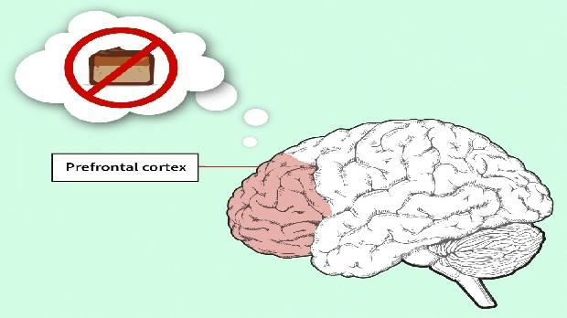 "The prefrontal cortex acts as the brain's ""brakes"" but it's weakened by too much sugar (and fat)."