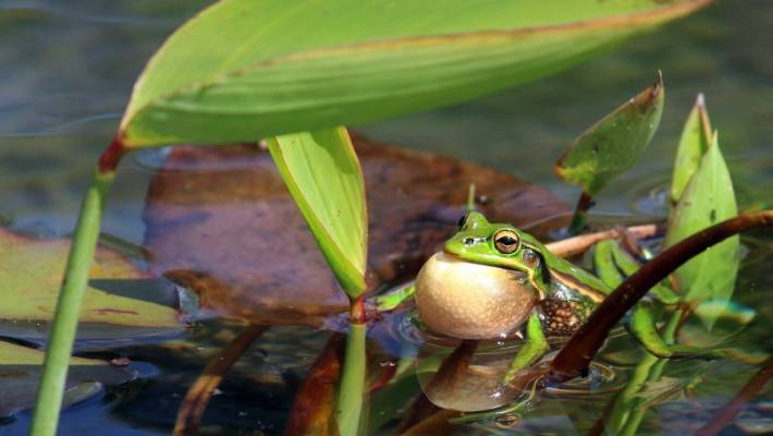 Save the frogs! | Stuff co nz