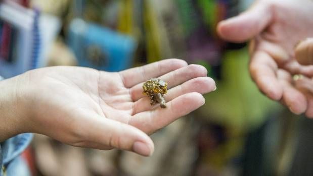 "Edible insects are flying off the shelves in Blenheim and ""everybody"" is trying them."