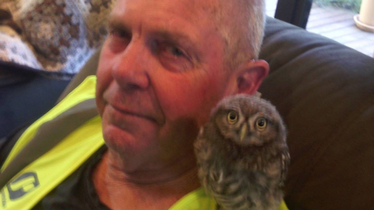 Southland Couple Care For Television Watching Owl Stuff