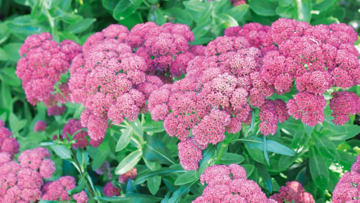 How to look after perennial flowering plants in spring stuff mightylinksfo